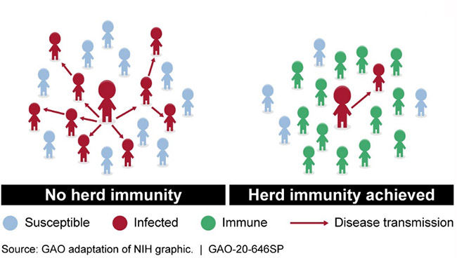 A chart explaining herd immunity