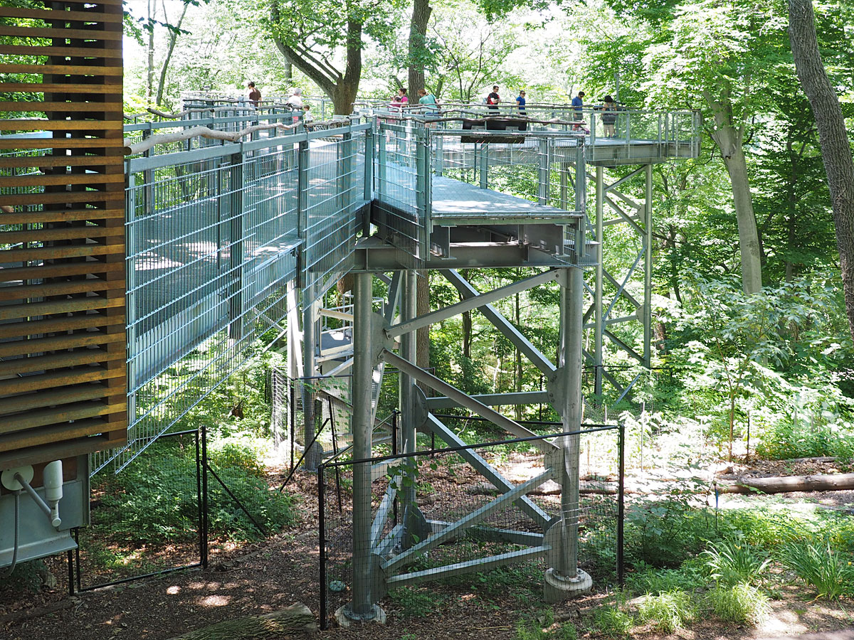 One of the Arboretumu0027s most unusual modern additions is 50-foot high steel walkway traversing a dense forestu0027s canopy (above left). & A SUMR Day at Pennu0027s Tree Museum | LDI